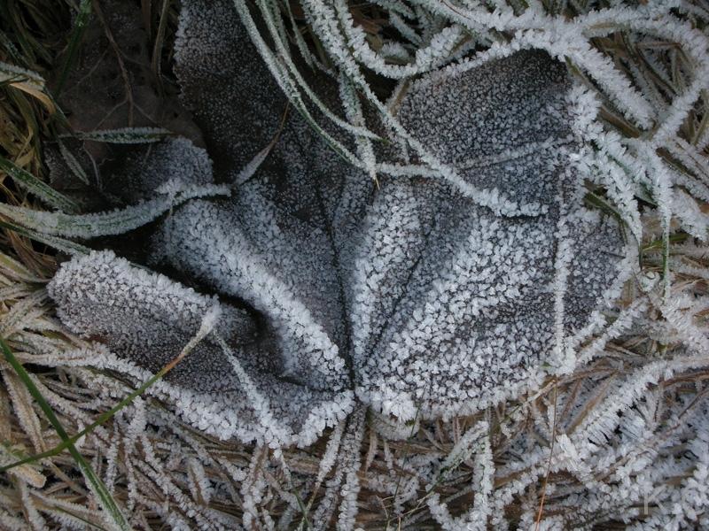 winterahorn