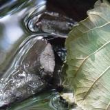 grueneswasserblatt